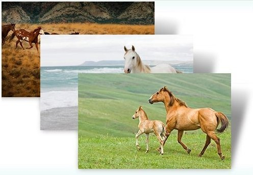 Download Windows 7 Horses Theme Pack