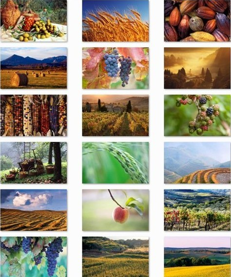 Harvest Time Windows 7 Theme Pack