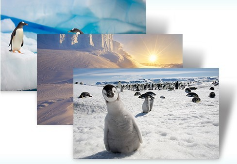 Download Antarctic Windows 7 Theme Pack