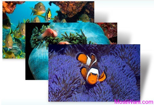 Tropical Fish Theme Pack For Windows 7 & Windows 8